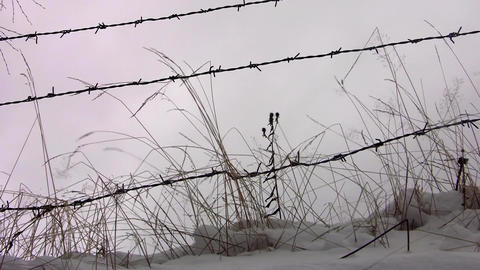 Dried herbs windy cold of winter and barbed wire fence 59 Footage