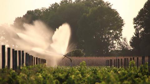 Vineyards Irrigation In Autumn stock footage