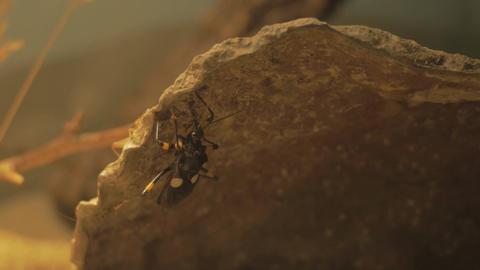 Bug on underside of rock Footage