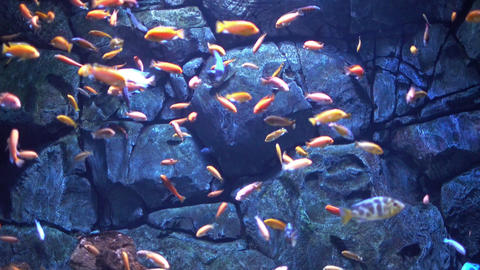 Fishes in an aquarium Live Action