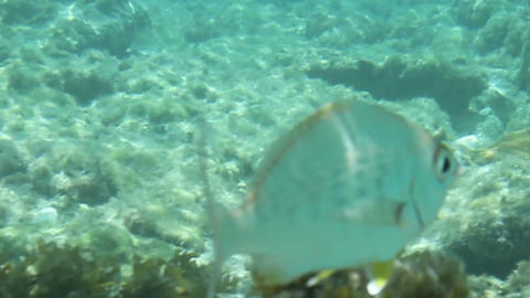 Fish swimming through clear blue water Footage
