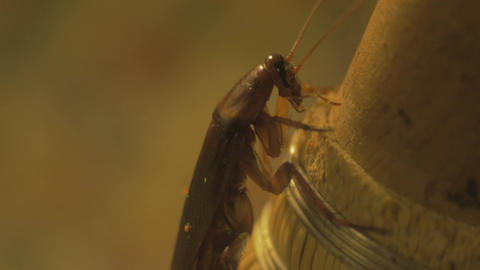 Macro shot of insect on broom Footage