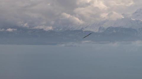 Soaring eagle overlooking scenic landscape Live Action