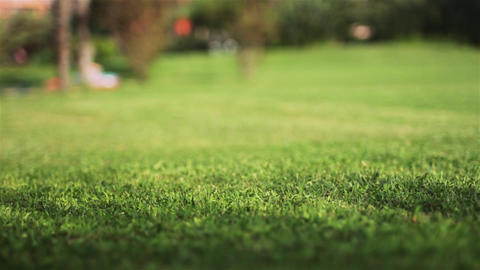 Green grass with a defocus 画像