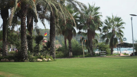 Palm Trees Near Sea Stock Video Footage