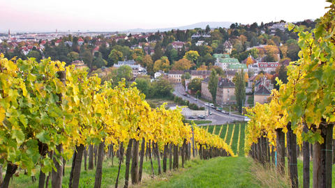 Evening view from autumnal vineyards in Vienna, Austria Live Action