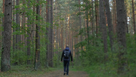 Man walking through a forest Image