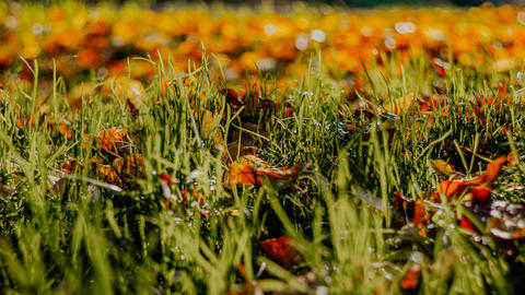 autumn leaves on grass Foto