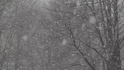 Snow (slow Motion ) 2