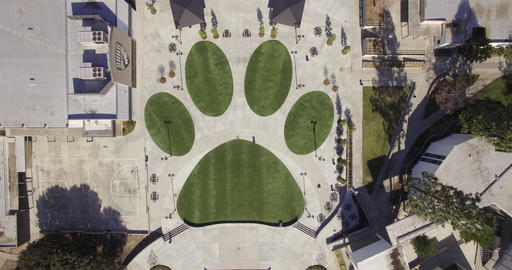 School Dog Paw Print Live Action