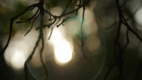 Sunlight shining through the branches , natural blurred background, Nature Live Action