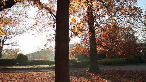 Fallen Leaves / Autumn Colors / Morning Sun / Backlight - Tilt Up/Fix ビデオ