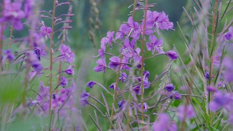 Flower grows in the field Footage