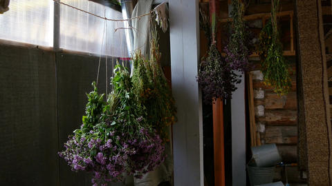 Bouquets of herbs are dried indoors Footage