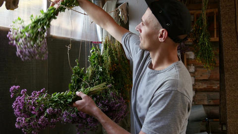 Bouquets of herbs are dried Live Action
