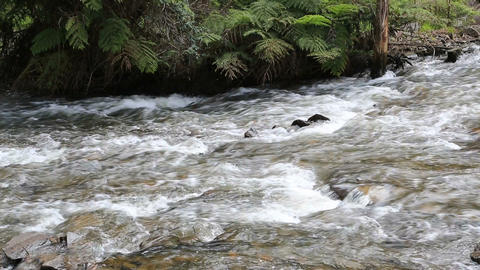 flowing river Stock Video Footage