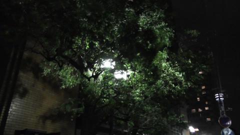 Typhoon in Yokohama Japan 01 handheld Stock Video Footage