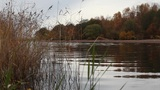 riverbank in autumn Footage