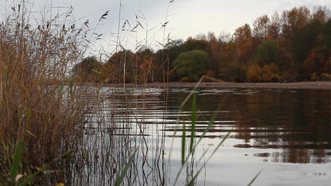 riverbank in autumn Stock Video Footage