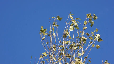 Branches swing the wind Stock Video Footage