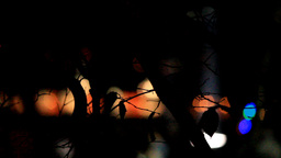 LIGHTS BEHIND THE TREES Stock Video Footage