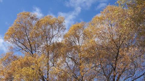 Treetop shaken wind 02 Stock Video Footage