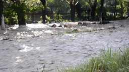 Floods caused by heavy rain water stream flowing through gardens and orchards 32 Footage