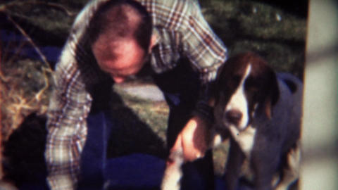 1947: First aid on wounded dog leg by balding flannel shirt man Footage