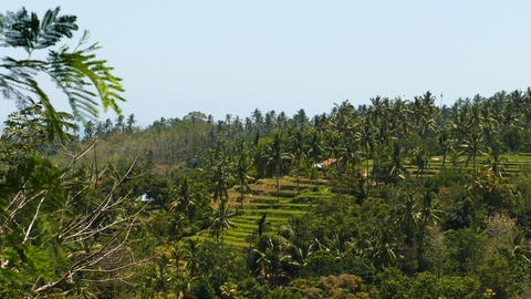 View over rice terraces in Indonesia Live Action