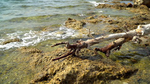 dead tree on the rocky shore of the Mediterranean sea Footage
