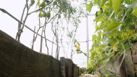 Many plants grow in the greenhouse Filmmaterial