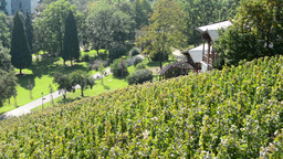 vineyard - wooden building - park (trees and grass) - people walking and sitting Footage
