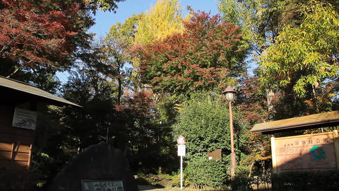 "Autumn Park. Translation: ""Yokuonkan Park, Koganei-shi"" / Blue Sky - Tilt Up/Fix Footage"