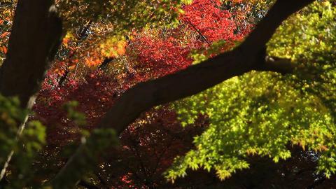 Autumn Leaves / Fall Colors / Bokeh - Fix ビデオ