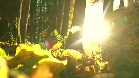 Falling yellow leaves against blazing sun and picnic basket. Sunny autumn day Footage