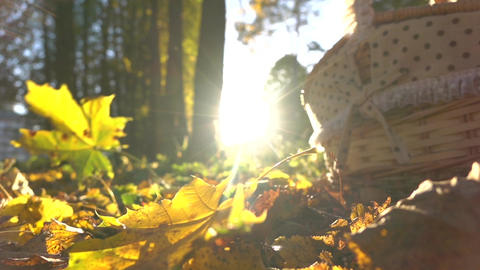 Super slow motion shot of falling autumn leaves against shining sun and picnic Footage
