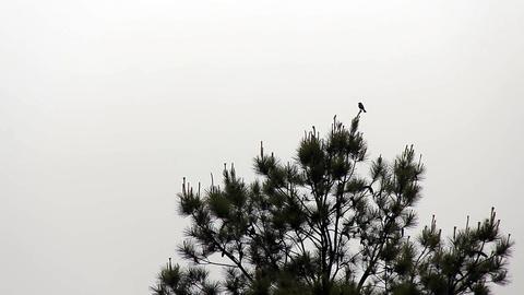 Bird in the rainforest Image