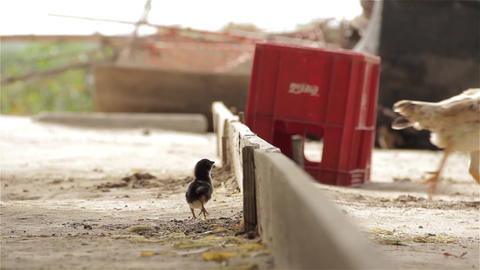 Chick solves a problem Live Action
