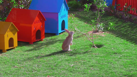 A yellow rabbit is sitting near a small tree, eating leaves 画像