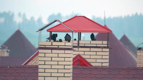 Flock of birds taking shelter from the rain on the urban roofs Footage