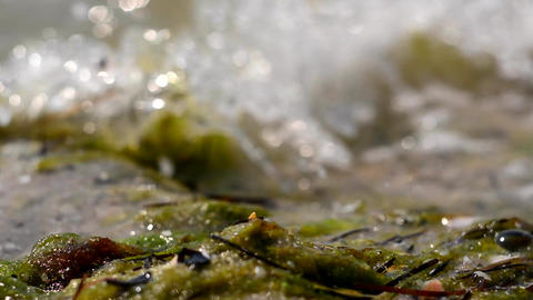 The waves of the sea and the beach from seaweed and shells. Foam of sea water Footage