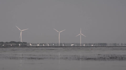 Birds on the lake against the background of wind generators ビデオ