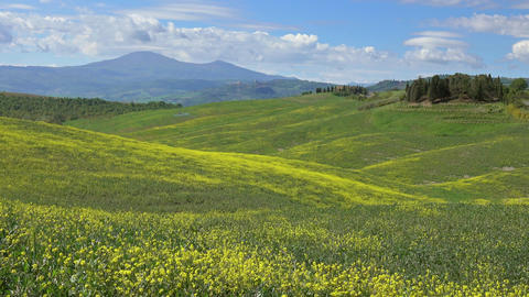 Tuscany hills with yellow flowers on green fields Footage