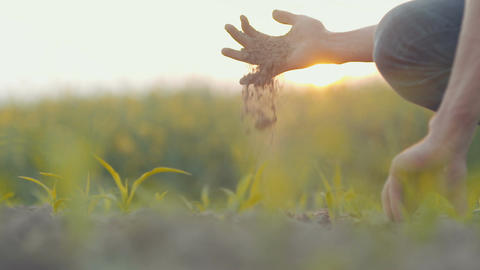Soil, Agriculture, - Farmer hands holding and pouring back organic soil Footage
