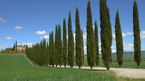 Tuscany farmhouse and cypresses at sunny day Footage