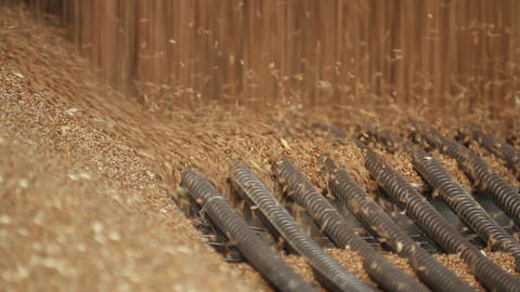 Wheat grain close-up Footage