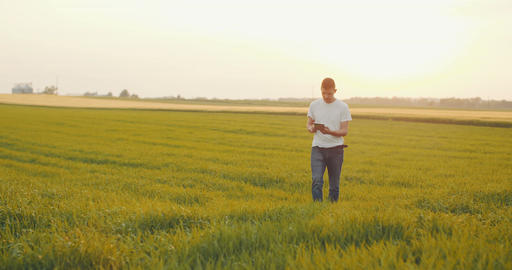 Modern Young Farmer using digital tablet on agricultural field Filmmaterial