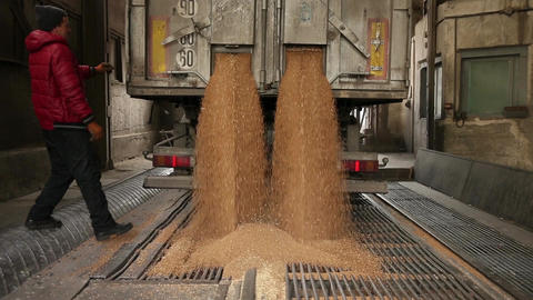 Grain truck unloading Footage