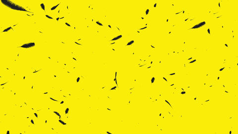 Black feathers on a yellow background CG動画素材