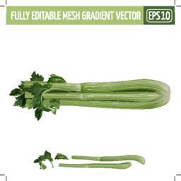 Celery on white background. Vector illustration Vector